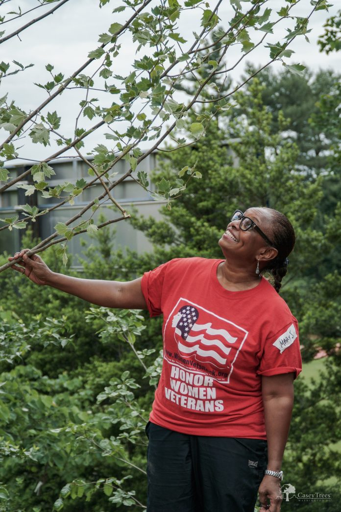Learn how to identify and understand the trees that line your street, shade your yard and make DC feel like home with Casey Trees this Saturday. Image: Casey Trees